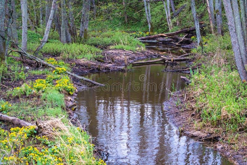 Mała rzeka z wiele roślina korzeniami zdjęcia stock