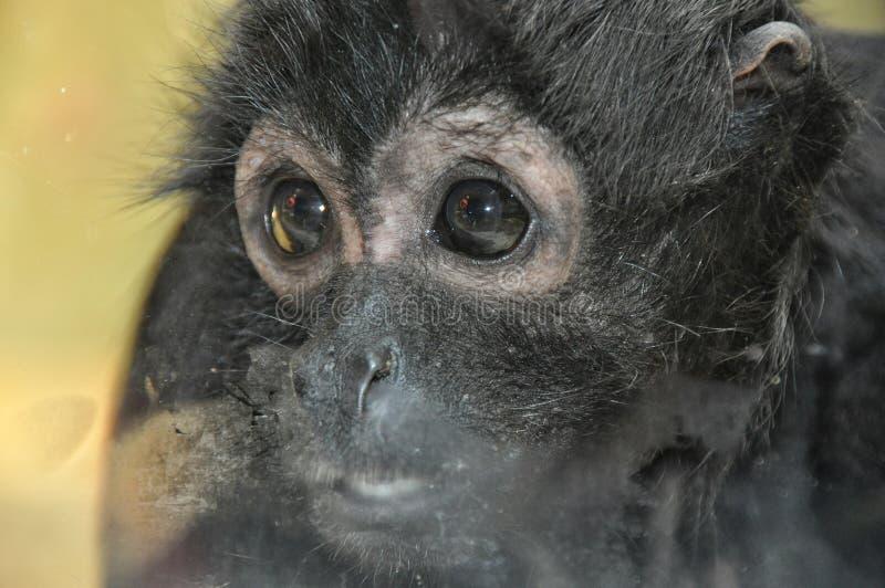 Mała smutna małpa obraz stock