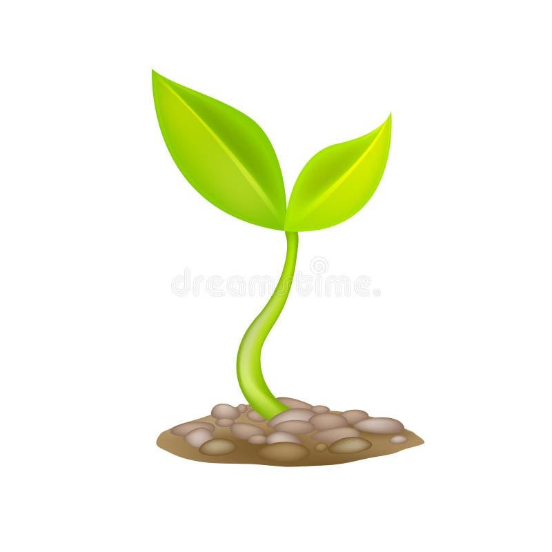 mała sprout Nowa życie alegoria ilustracja wektor