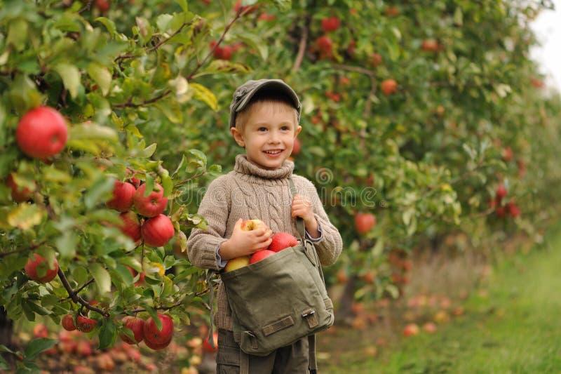 Mała uśmiechnięta chłopiec w jabłczanym sadzie jest stojąca torbę jabłka i trzymająca zdjęcie stock