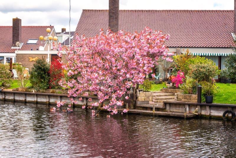 Mała wygodna holenderska wioska przy wiosną, piękny dzienny wieś krajobraz, holandie zdjęcia royalty free