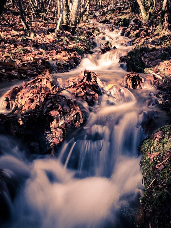 Mała zatoczka biega wśród drzew zdjęcia stock
