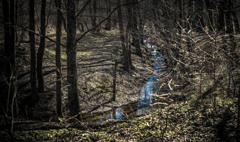Mała zatoczka w ciemnym lesie zdjęcia stock