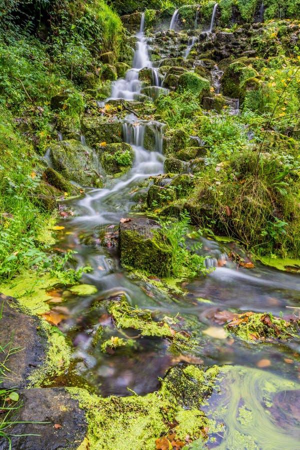 Mała zatoczka wody zieleni mech zdjęcie stock