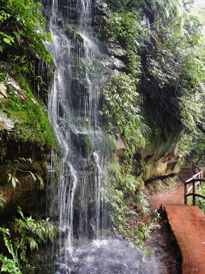 Mała zatoczki siklawa w parku narodowym Jiuzhaigou obrazy royalty free