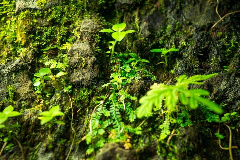 Mała zieleń liści roślina na dużym kamieniu zdjęcia stock