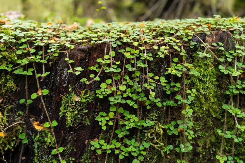 Mała zielona lasowa roślina zdjęcie stock
