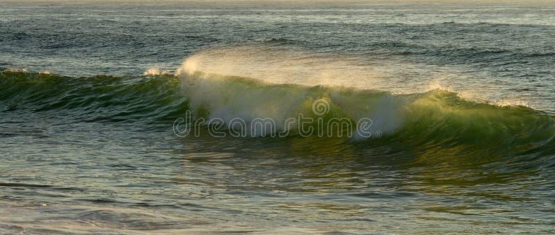 Mała zielona ocean fala backlit słońca światłem fotografia stock