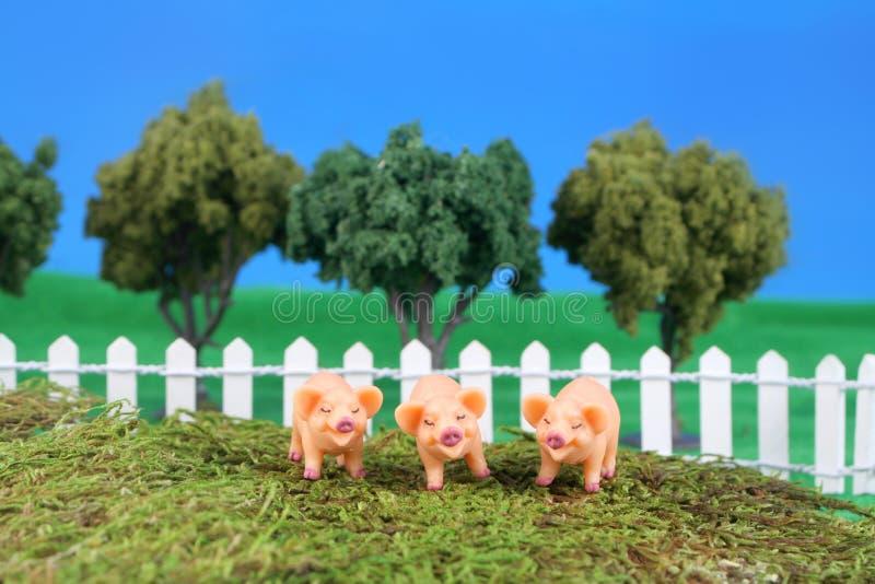 małe świnie trzy zdjęcia stock
