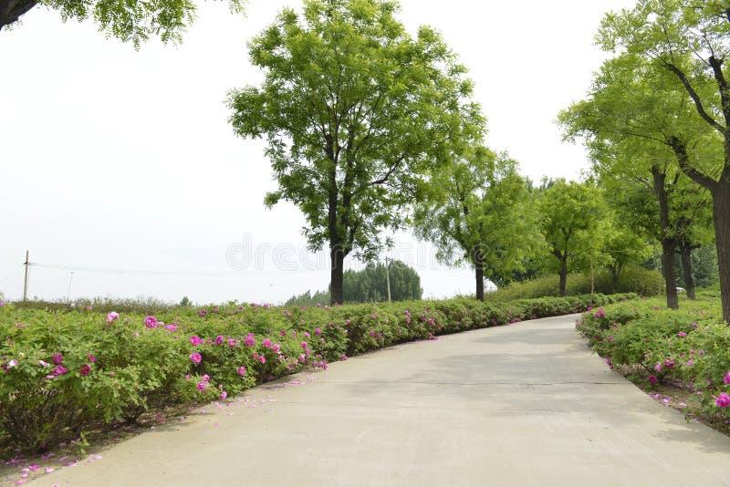 Małe drogi, kwiaty, duzi drzewa zdjęcie stock