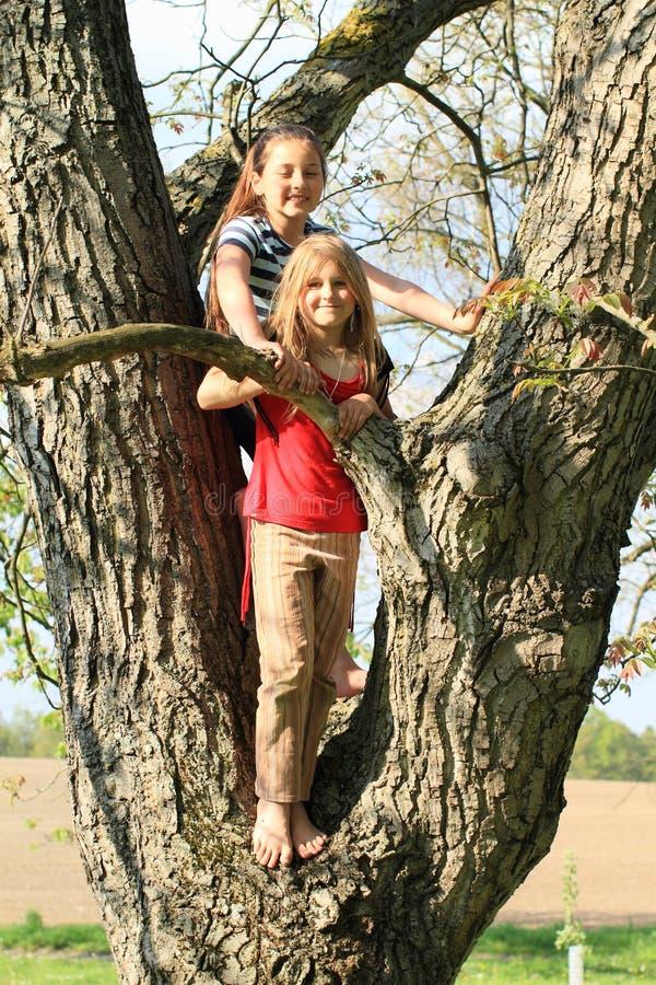 Małe dzieci - dziewczyny stoi na drzewie obrazy stock
