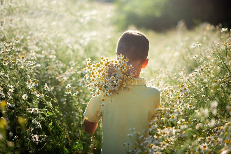 Małe dziecko chłopiec mienia bukiet pole rumianek kwitnie w letnim dniu widok z powrotem zdjęcie royalty free