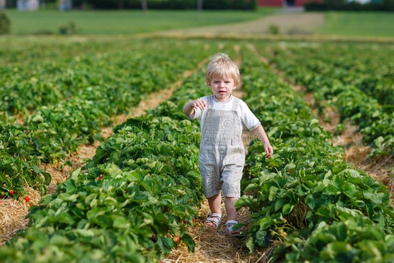 Małe dziecko na organicznie truskawki gospodarstwie rolnym zdjęcie royalty free