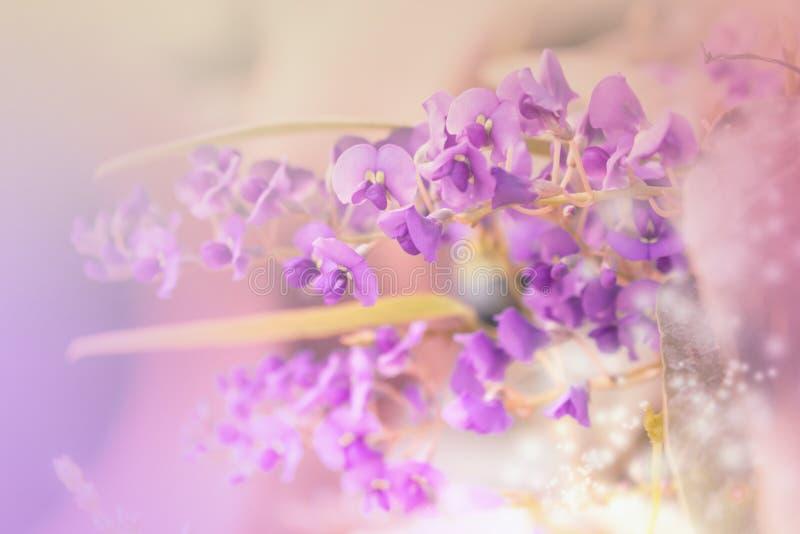 małe fioletowy kwiat zdjęcia stock