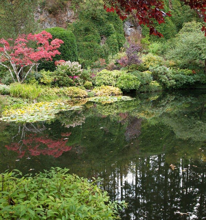 małe jeziorko zdjęcia royalty free