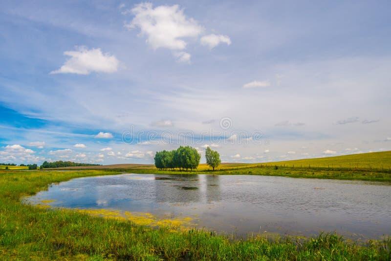 Małe jezioro / staw z polami i łąkami w letniej pogodzie zdjęcia royalty free