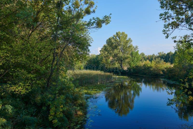 Małe jezioro w leśnym pięknym krajobrazie zdjęcia royalty free