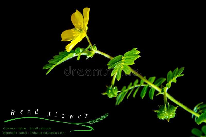 małe kotewki odchwaszczają, odizolowywali, rośliny na czarnym tle zdjęcia royalty free