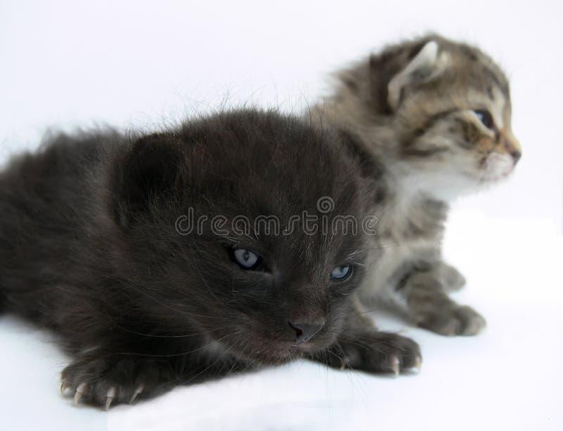 małe koty obrazy stock