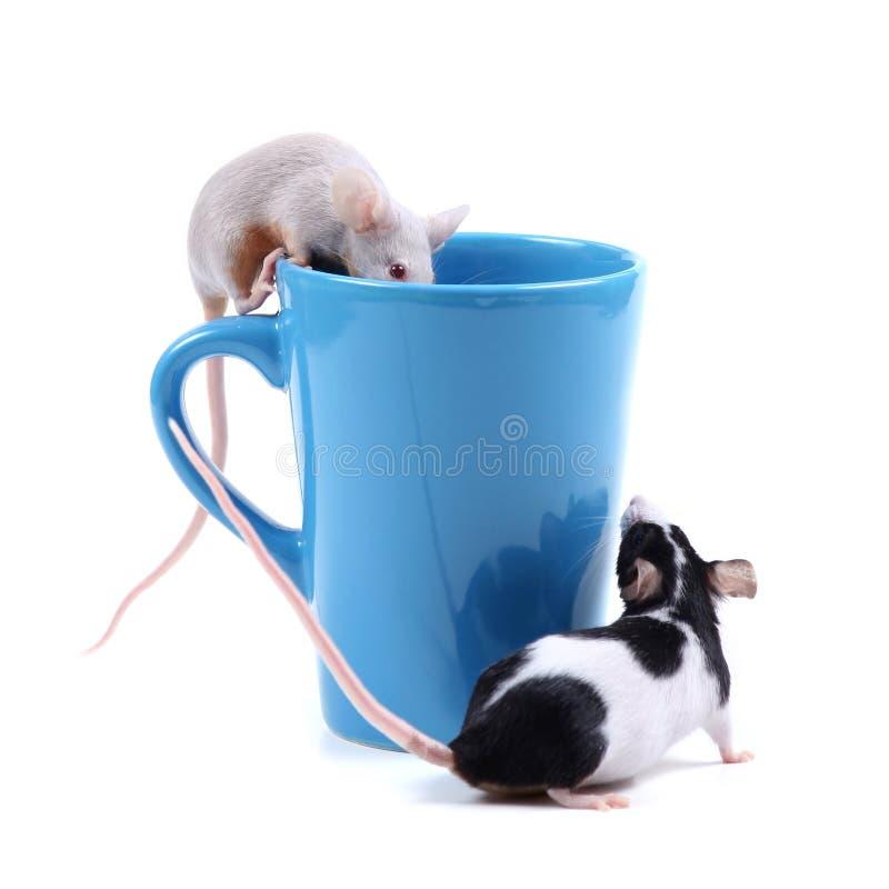 małe myszki zdjęcie stock
