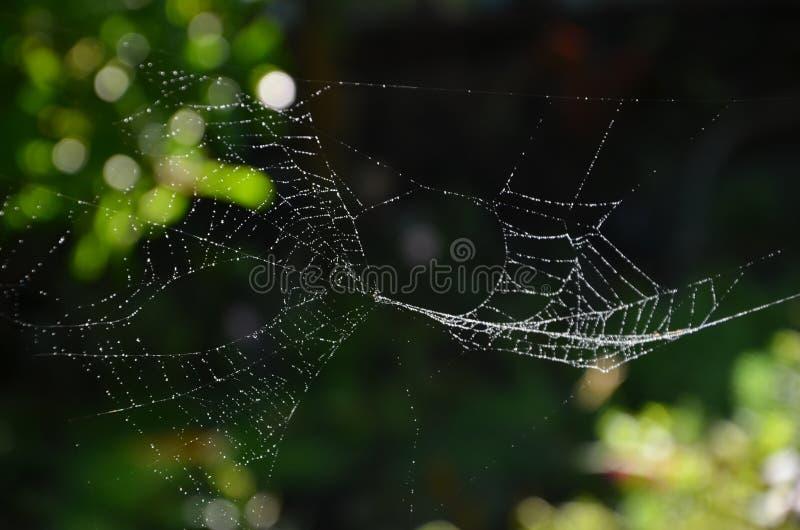 Małe rosa krople na cienkich pająk sieciach fotografia stock