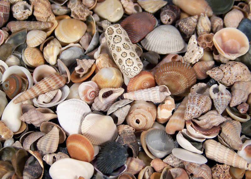 małe seashells obraz stock