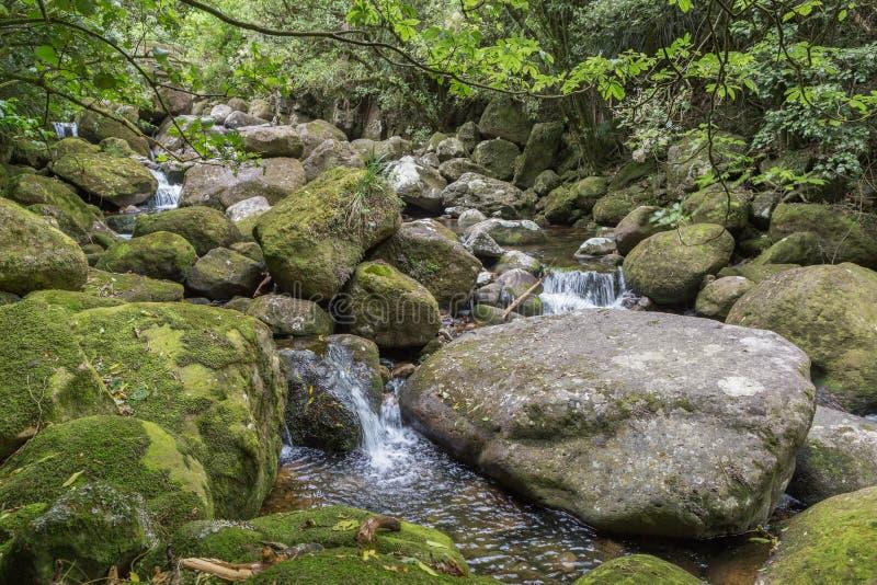 Małe siklawy wśród zielonych mechatych skał fotografia stock