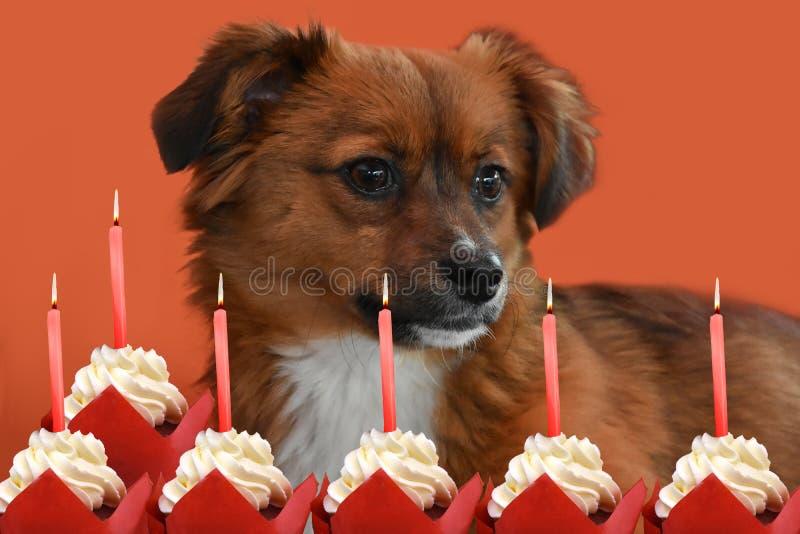 Małe szczeniaka urodziny i psa świeczki fotografia royalty free