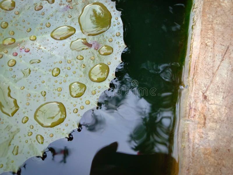 Małe wodne kropelki na liściu zdjęcia royalty free