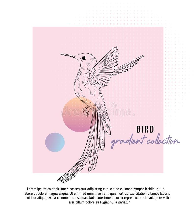 Małego colibri wektorowa ilustracja z typografią Cyfrowej sztuka z modnymi geometrycznymi kształtami i gradientową siatką Mały br ilustracja wektor