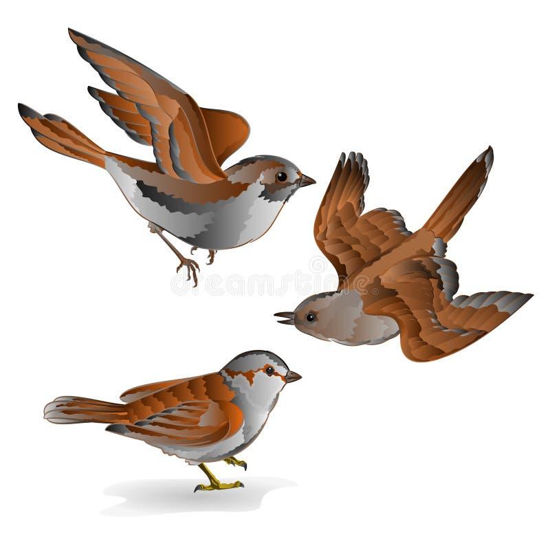 Małego ptaka lisiątka przechodnia domesticus wróbliego rocznika kwinty ustalony wektor ilustracja wektor