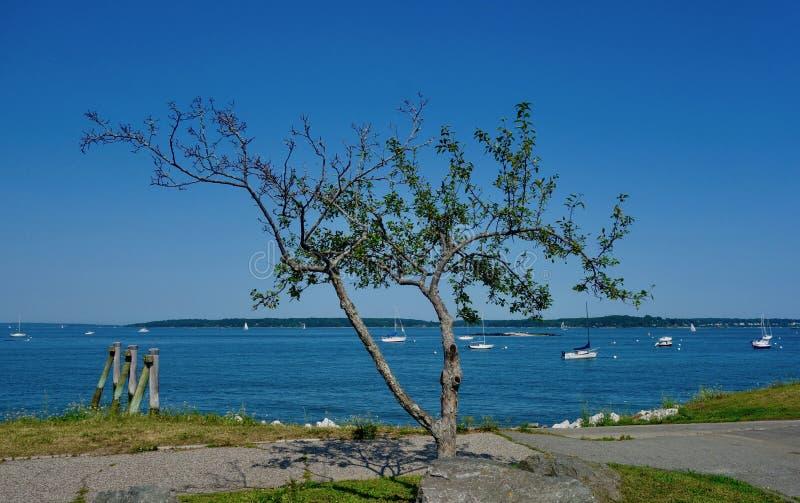 Małego scraggly oceanu drzewny nadmorski i białe łodzie w wodzie obraz royalty free