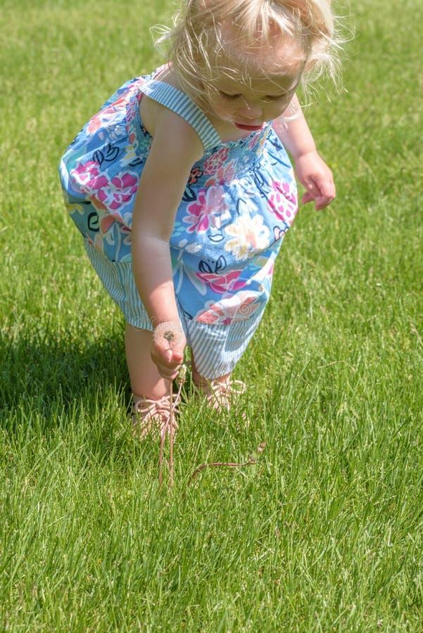 Małej dziewczynki ciągnięcia dandelions w trawie w lecie obrazy royalty free