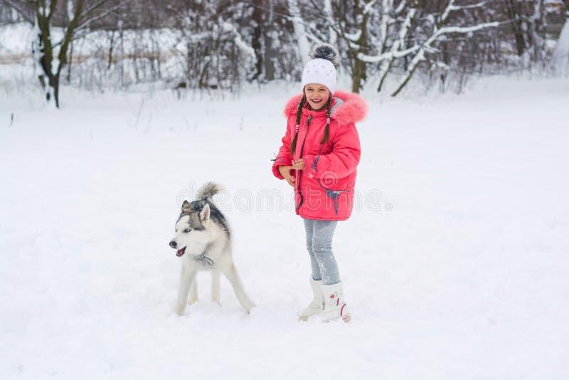 Małej dziewczynki odprowadzenie z Syberyjskiego husky trakenu psem w winte obraz royalty free