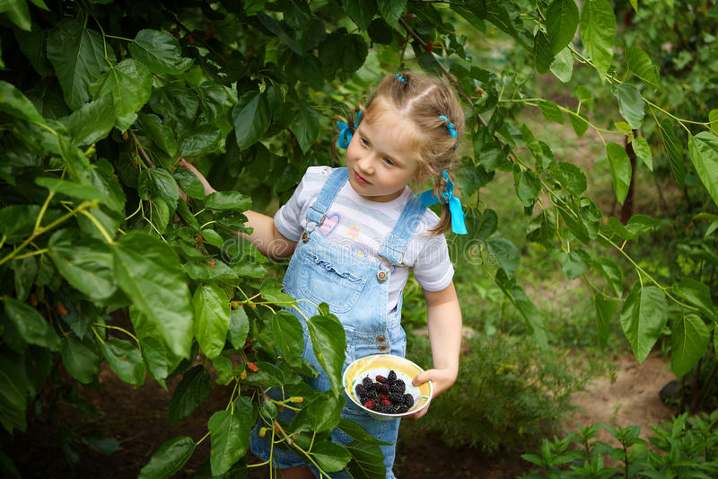 Małej dziewczynki zgromadzenia żniwa morwy jagody fotografia stock