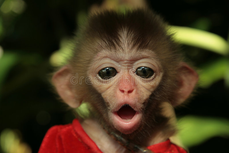 małpa jest dziecko fotografia royalty free