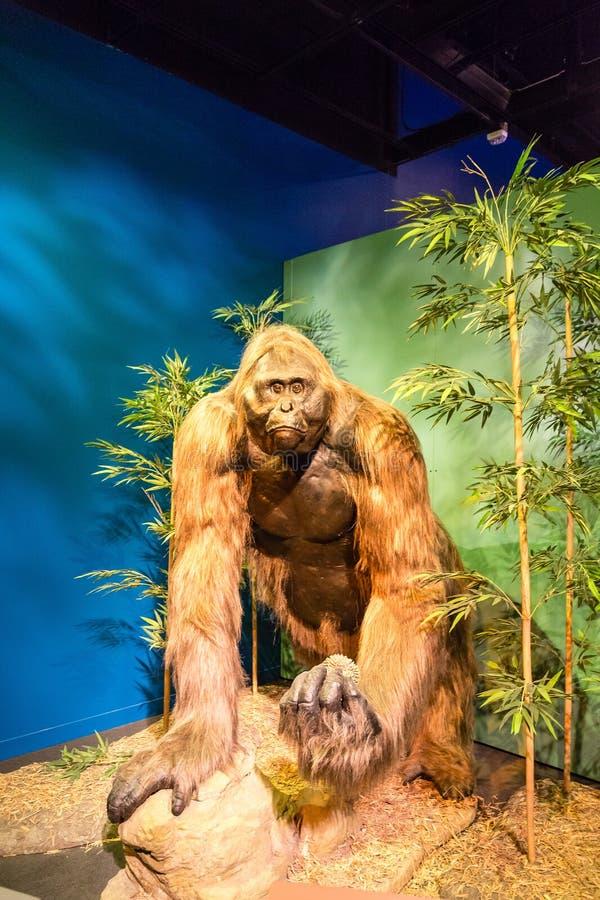 Małpa mężczyzna obrazy stock