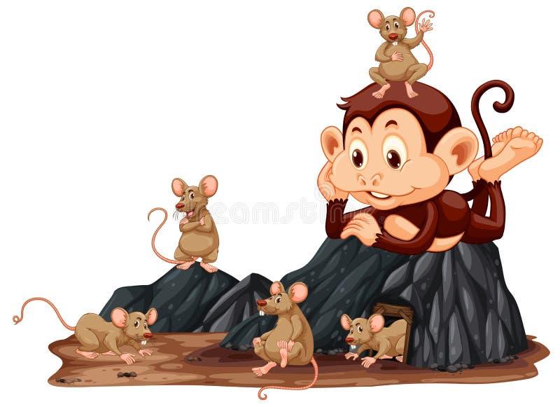 Małpa patrzeje szczura ilustracji
