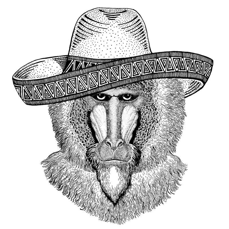 Małpa, pawian, małpa, małpa jest ubranym tradycyjnego meksykańskiego kapelusz Klasyczny pi?ropusz, fiesta, przyj?cie ilustracja wektor