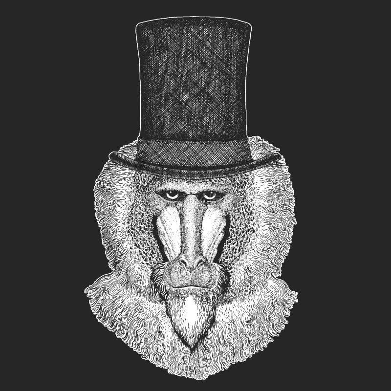 Małpa, pawian, małpa, małpuje Odgórnego kapelusz, butla Modnisia zwierzę, dżentelmen Klasyczny pióropusz Drukuje dla dziecko kosz ilustracji
