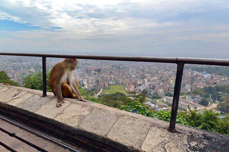 Małpa relaksuje przy Swayambhunath świątynią obraz royalty free