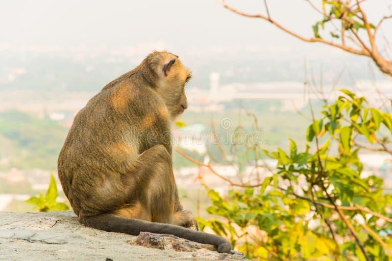 Małpa siedzi relaksować na falezie w wieczór szczęśliwie fotografia royalty free
