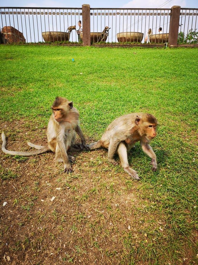 małpa Thailand zdjęcie royalty free