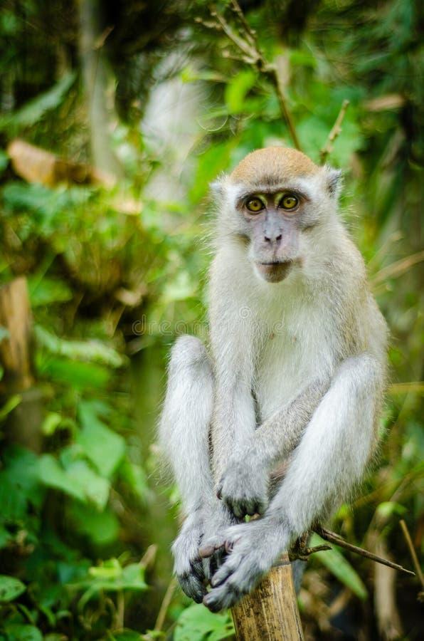 Małpa w dżungli zdjęcia stock