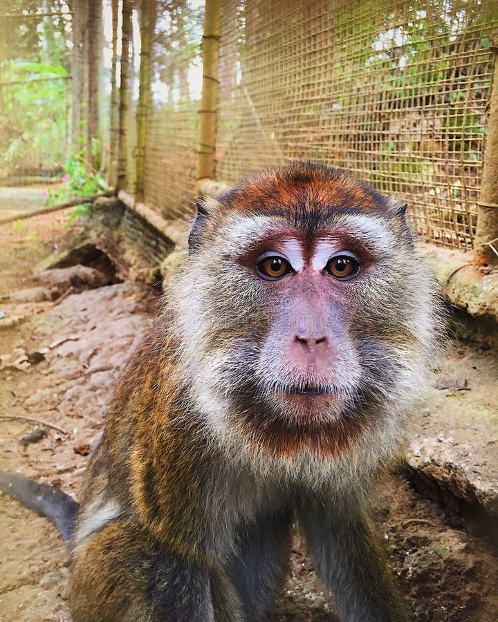 małpa widzi obraz stock