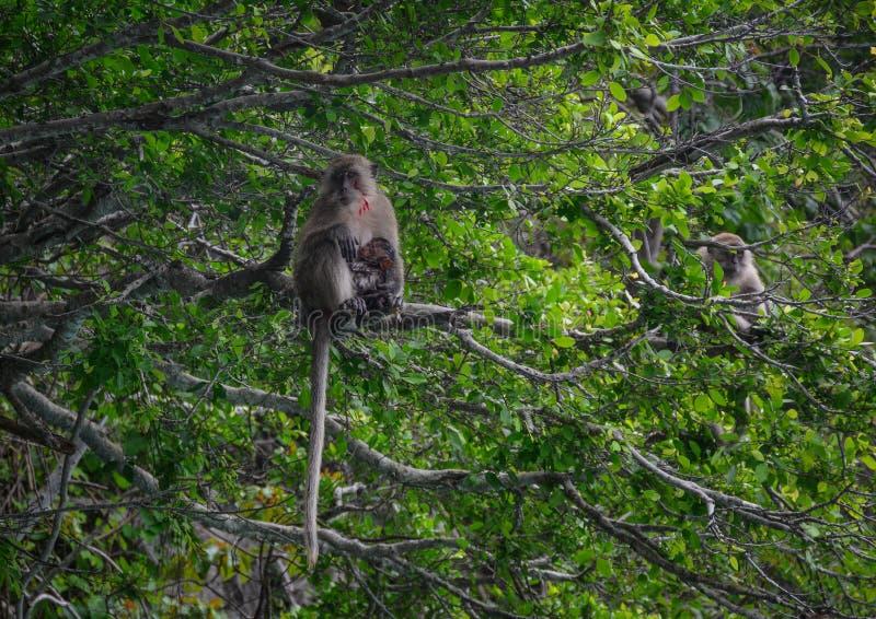 Małpa z dziecko małpą na drzewie obraz stock