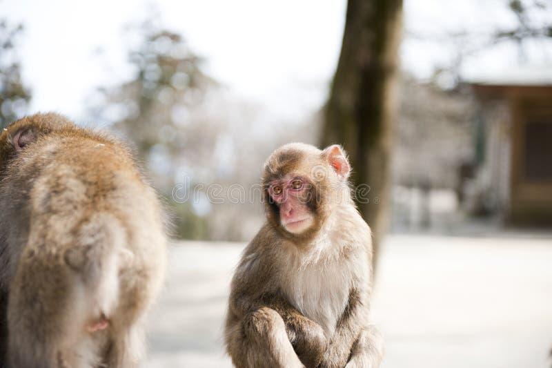 Małpi dziecko zdjęcia royalty free