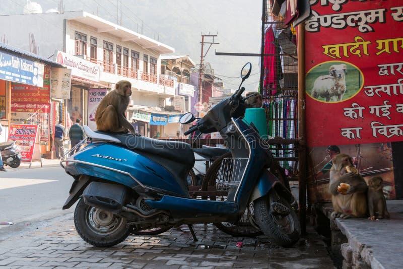 Małpi obsiadanie na moped na miasto ulicie zdjęcia stock