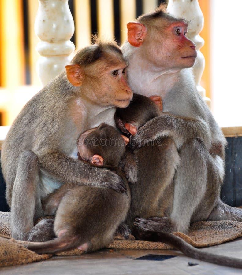 Małpia rodzina zdjęcie royalty free