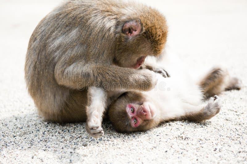 Małpia rodzina fotografia stock